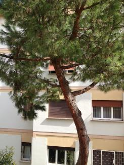pine-from-inside